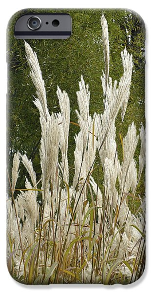 Nature Abstracts iPhone Cases - Tall Grass iPhone Case by William Wernicke