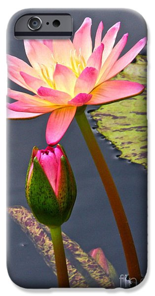 Tall Waterlily Beauty iPhone Case by Byron Varvarigos