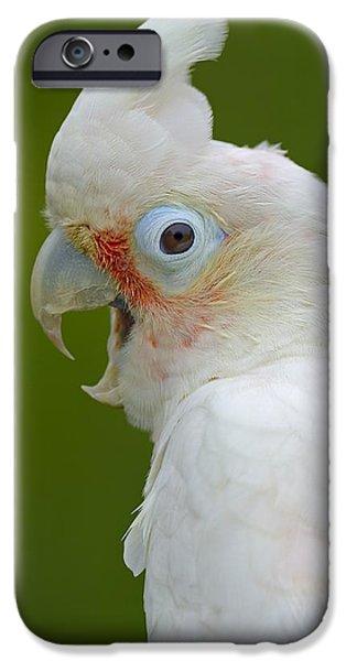 Cockatoo iPhone Cases - Tanimbar Correla iPhone Case by Tony Beck