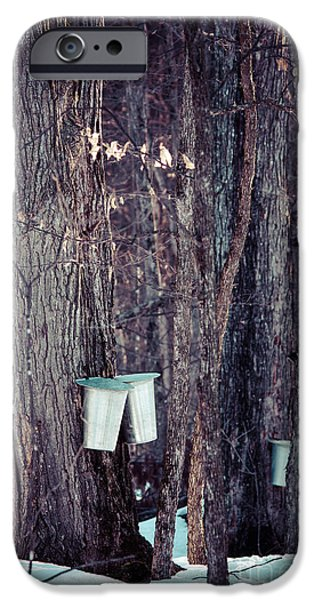 Sugaring Season iPhone Cases - Tapped Maples iPhone Case by Cheryl Baxter