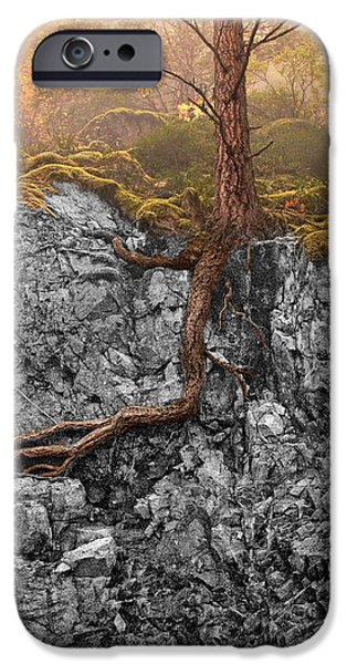 Tree Roots iPhone Cases - Taproot iPhone Case by Mary Jo Allen
