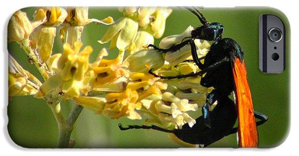 Hornets Nest iPhone Cases - Tarantula Hawk Wasp iPhone Case by Richard Stephen