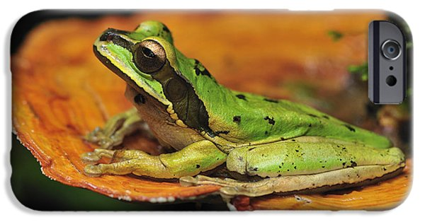New Individuals iPhone Cases - Tarraco Treefrog On Mushroom Costa Rica iPhone Case by Thomas Marent