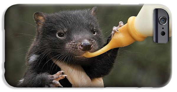 Fed iPhone Cases - Tasmanian Devil Baby Being Fed iPhone Case by Gerry Pearce