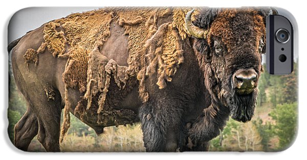 American Bison iPhone Cases - Tatanka - American Bison iPhone Case by Mark Mesenko