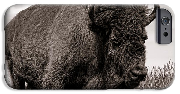 Bison Photographs iPhone Cases - Tatanka iPhone Case by Olivier Le Queinec
