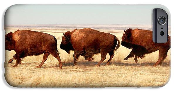 Power Animal iPhone Cases - Tatanka iPhone Case by Todd Klassy