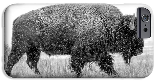 Bison Photographs iPhone Cases - Tatonka iPhone Case by Nathan Gingles