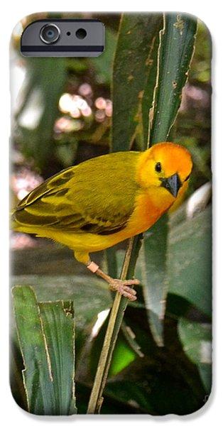 Birds iPhone Cases - Taveta Golden Weaver iPhone Case by Carol  Bradley
