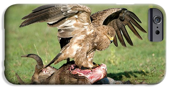 East Africa Photographs iPhone Cases - Tawny Eagle Aquila Rapax Eating A Dead iPhone Case by Panoramic Images