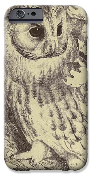 Dentist Drawings iPhone Cases - Tawny Owl iPhone Case by Unknown Artist