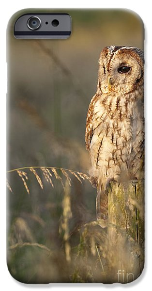 Size iPhone Cases - Tawny Owl iPhone Case by Tim Gainey