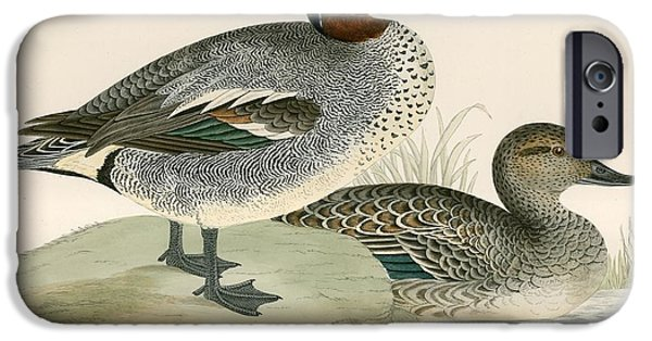 Hunting Bird iPhone Cases - Teal iPhone Case by Beverley R. Morris