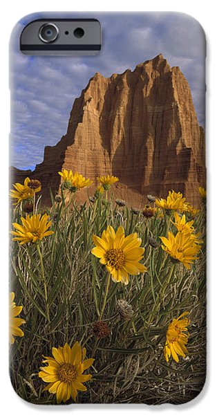 Cathedral Rock iPhone Cases - Temple Of The Sun With Sunflowers iPhone Case by Tim Fitzharris