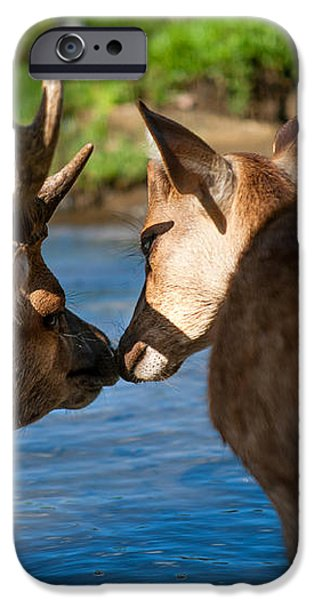 Tender Kiss. Deer in the Pamplemousse Botanical Garden. Mauritius iPhone Case by Jenny Rainbow