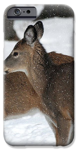 Tender Sentiment iPhone Case by Christina Rollo