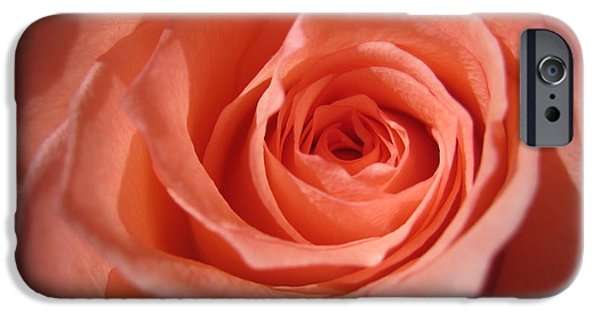 Flora Drawings iPhone Cases - Tenderness Pink Rose 3 iPhone Case by Tara  Shalton