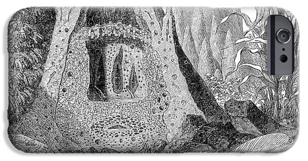 Mounds iPhone Cases - Termite Mound And Castes iPhone Case by Spl