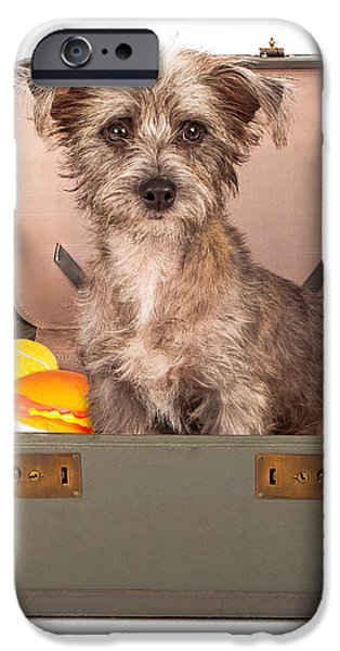 Terrier Dog in Suitcase iPhone Case by Susan  Schmitz