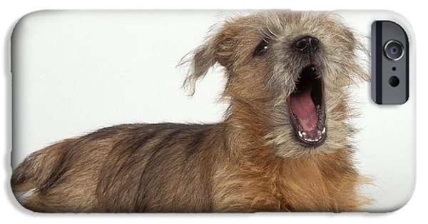 Lazy Dog iPhone Cases - Terrier Puppy Yawning iPhone Case by John Daniels