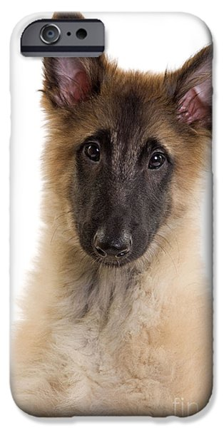 Dog Close-up iPhone Cases - Tervuren Puppy Dog iPhone Case by Jean-Michel Labat