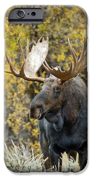 Bull Moose iPhone Cases - Teton Bull Moose iPhone Case by Gary Langley