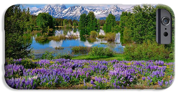 Recently Sold -  - Creek iPhone Cases - Teton Spring Lupines iPhone Case by Greg Norrell