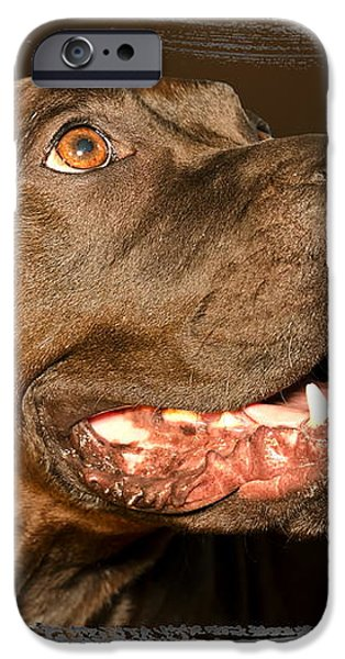 Tex the Dog iPhone Case by Harold Bonacquist