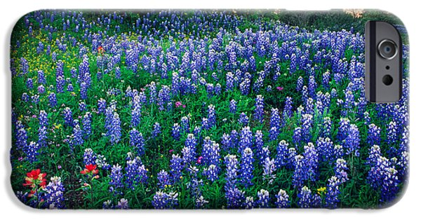 Solitude Photographs iPhone Cases - Texas Bluebonnet Field iPhone Case by Inge Johnsson