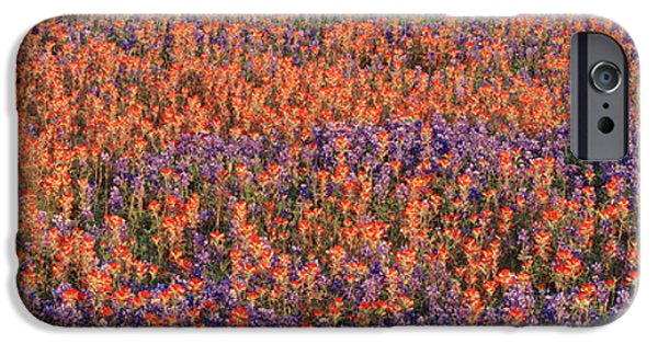Phlox iPhone Cases - Texas Bluebonnets And Indian iPhone Case by Panoramic Images