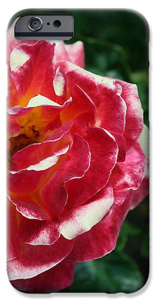 Texas Centennial Rose iPhone Case by Jose Valeriano