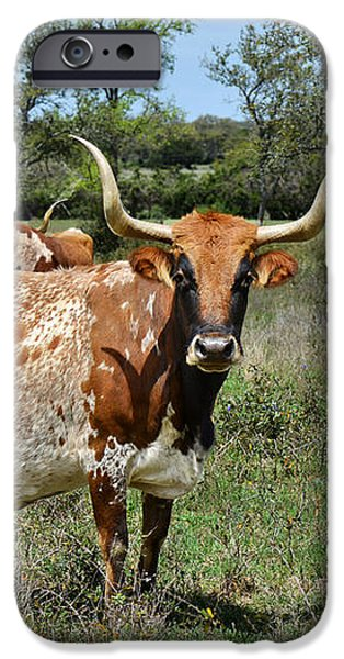Texas Longhorns iPhone Case by Christine Till
