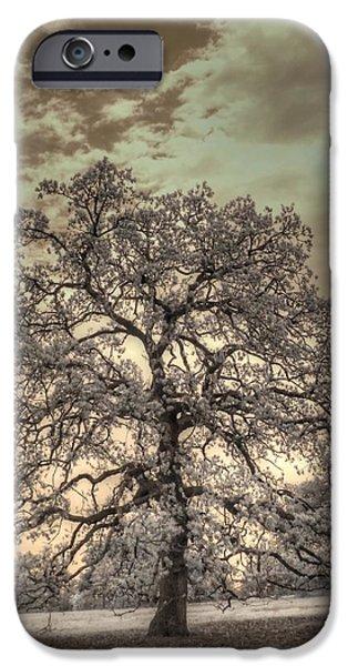 Mighty Oak iPhone Cases - Texas Oak Tree iPhone Case by Jane Linders