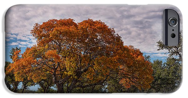 Oak Creek iPhone Cases - Texas Red Oak on Fire in the Hill Country - Fall Foliage Season in Central Texas iPhone Case by Silvio Ligutti