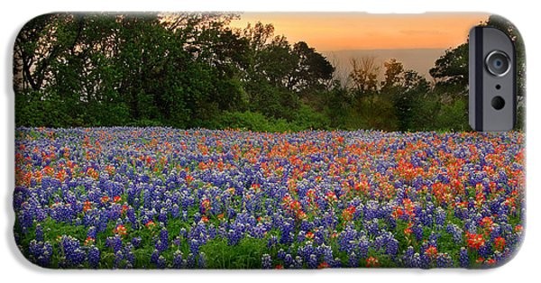 Floral Art iPhone Cases - Texas Sunset - Bluebonnet Landscape Wildflowers iPhone Case by Jon Holiday