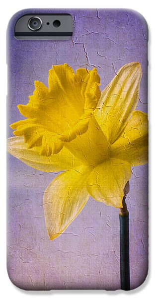 Close Up Floral iPhone Cases - Textured Daffodil iPhone Case by Garry Gay