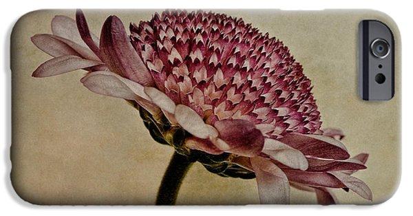 Chrysanthemum iPhone Cases - Textured Mum iPhone Case by John Edwards