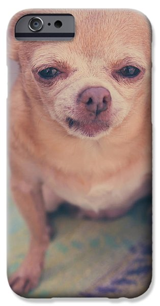 Small Dogs iPhone Cases - That Little Face iPhone Case by Laurie Search
