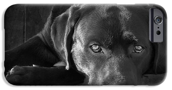 Best Sellers -  - Black Dog iPhone Cases - That Loving Gaze iPhone Case by Larry Marshall