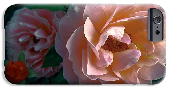 Pinky iPhone Cases - THAT PINK ROSE in the GARDEN iPhone Case by Daniel Hagerman