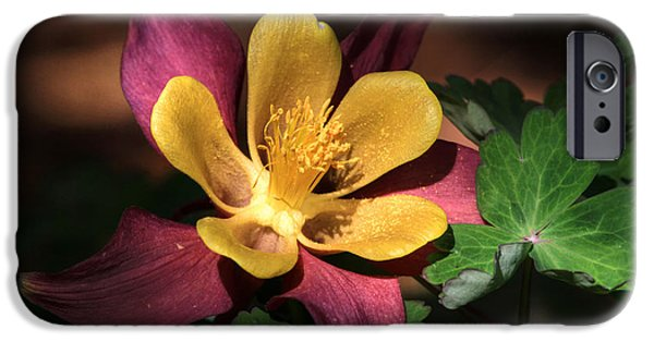 Columbine iPhone Cases - That Touch of Pink iPhone Case by Donna Kennedy