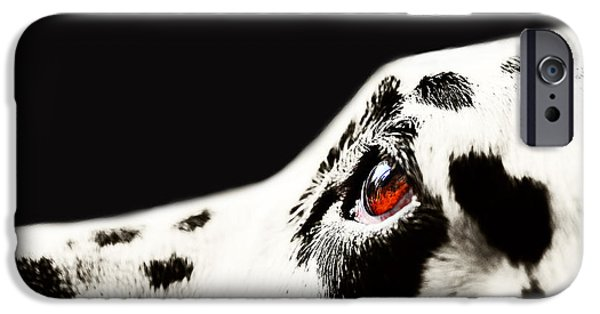 Dogs iPhone Cases - The Amber Eye. Kokkie. Dalmation Dog iPhone Case by Jenny Rainbow