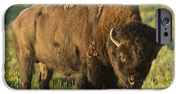 Bison Pyrography iPhone Cases - The American buffalo iPhone Case by Pedro Delmas