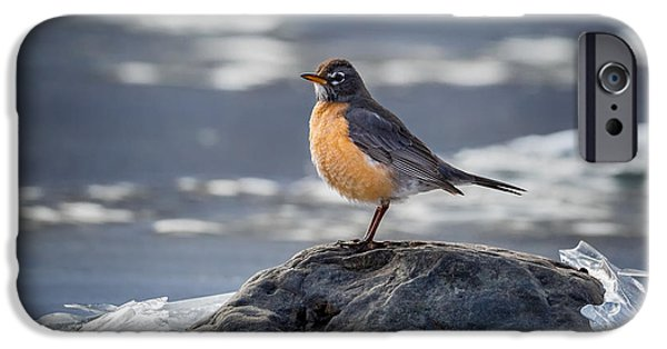 Robin iPhone Cases - The American Robin iPhone Case by Bill  Wakeley