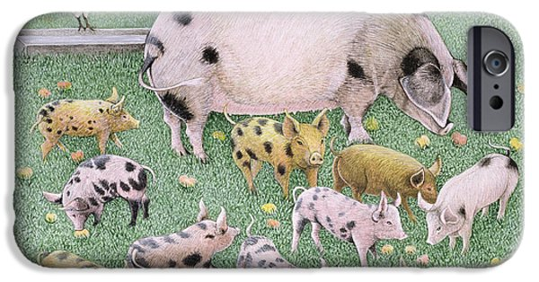 Piglets iPhone Cases - The Apple Feast Oil On Canvas iPhone Case by Pat Scott