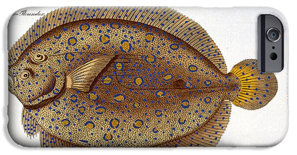 Hunting Drawings iPhone Cases - The Argus Flounder iPhone Case by Andreas Ludwig Kruger