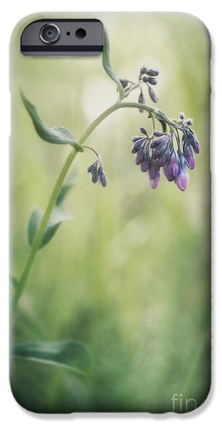 Flora Photographs iPhone Cases - The Arrival Of Spring iPhone Case by Priska Wettstein
