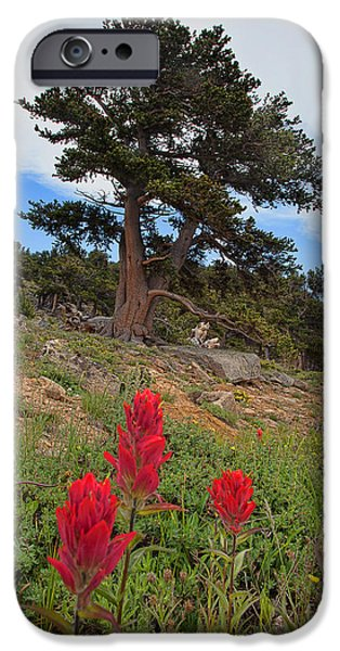 Pines iPhone Cases - The Artists Palette iPhone Case by Jim Garrison