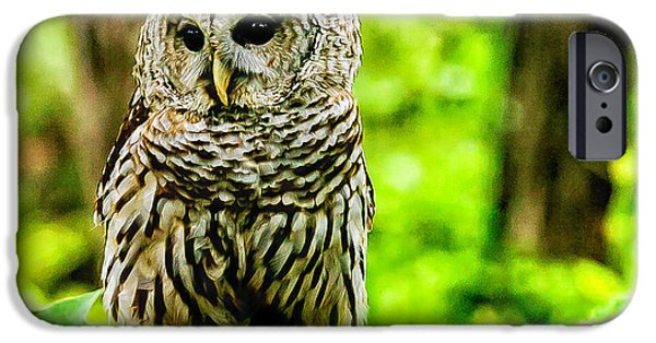 Barred Owl iPhone Cases - The Barred Owl iPhone Case by Louis Dallara