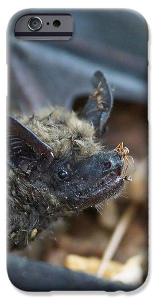 Bat iPhone Cases - The Bat iPhone Case by Ernie Echols